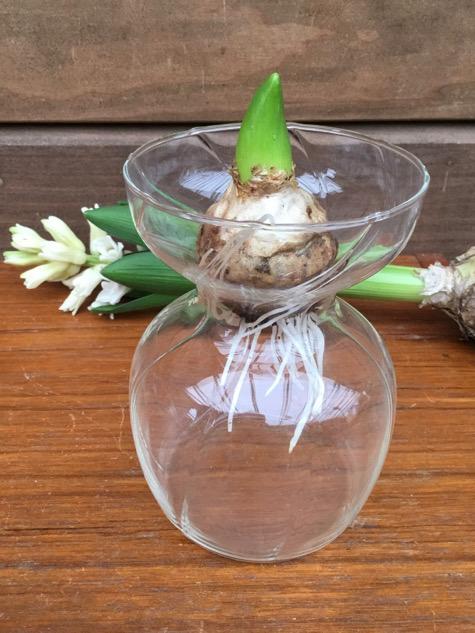 #holmegaardhyacintglas#holmegaardglasværk#holmegaardglas#hyacintvase#hyacintglas #løgvase #løgglas #swirl#klartglas #vase #vintage #vintageglas#midmod #interiør #boligindretning#tilsalg #sælges #forsale #genbrug#indretmedgenbrug #paulinekdk #vejle